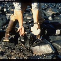 Cleanup worker on beach after Exxon Valdez. Image credit: Alaska Public Archive.