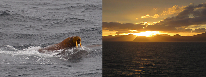 Left, a walrus swimming near the icebreaker. Right, the sun sets over the Aleutian Islands.