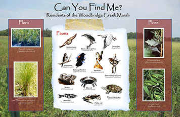 An interpretative sign displaying the flora and fauna found in Woodbridge Marsh.