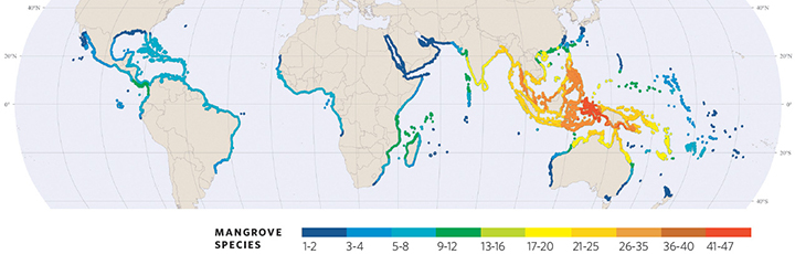 Map showing mangrove regions of the world.